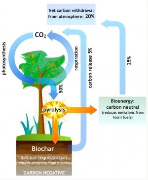 carboncycle2-300